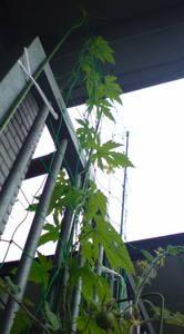 20100613goya.JPG