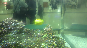 20111007fish.jpg